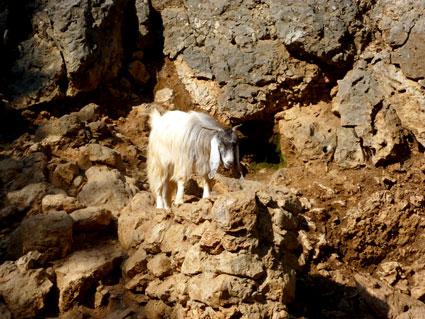 Liban - La Grotte de Jeita