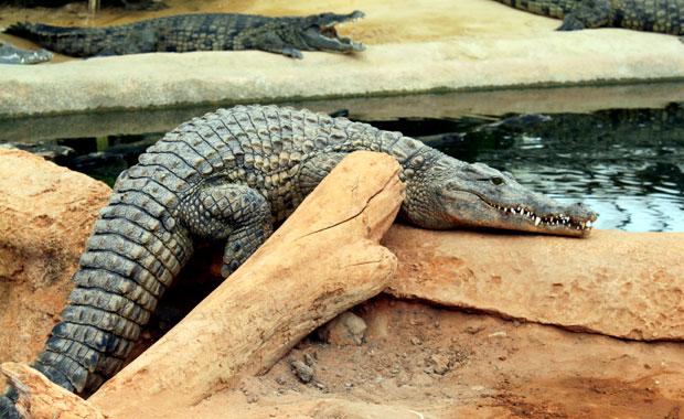 La ferme aux crocodile a Pierrelatte