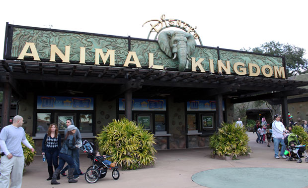 Disney Animal Kingdom – Suite et Fin