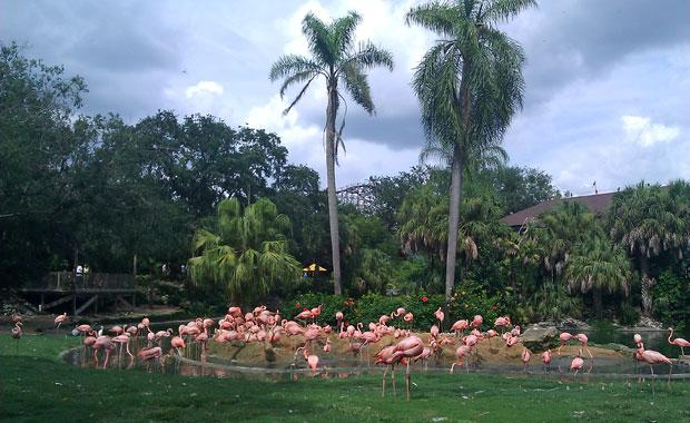 Premiers pas à Bush Gardens