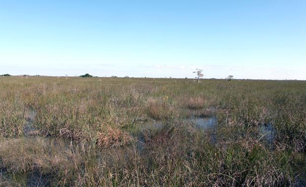 Week-end Autour de Miami : Les Everglades