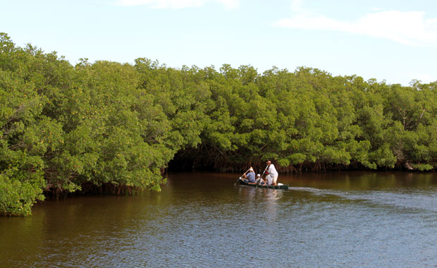 A la découverte de Weedon Island