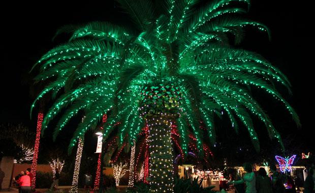Lumieres nassim jammal for Iluminacion para palmeras